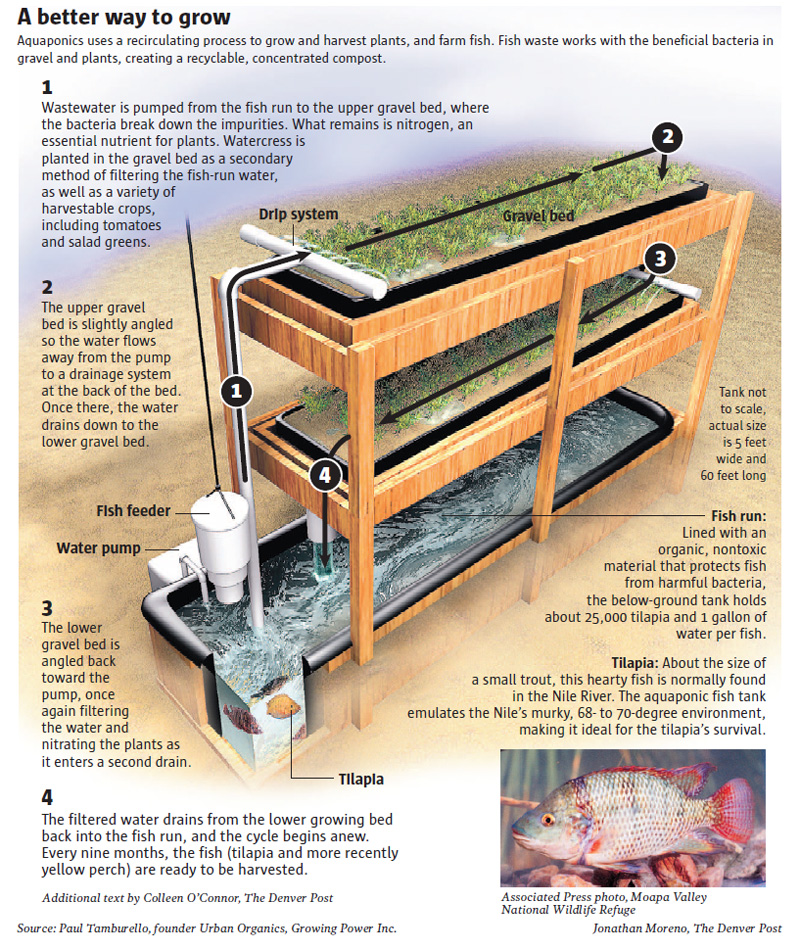 Backyard Homestead Layouts http://homesteadbasics.com/index.php/2010/01/12/aussie-aquaponics/