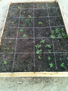 square-ft-garden